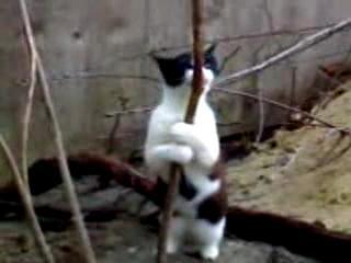 Кот стриптизёр. Просто улет! (видео)