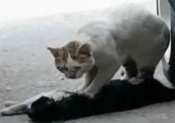 Животные умеют любить (трогательный видеоролик, смотреть всем!)