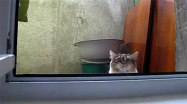 Кот отжигает (video)